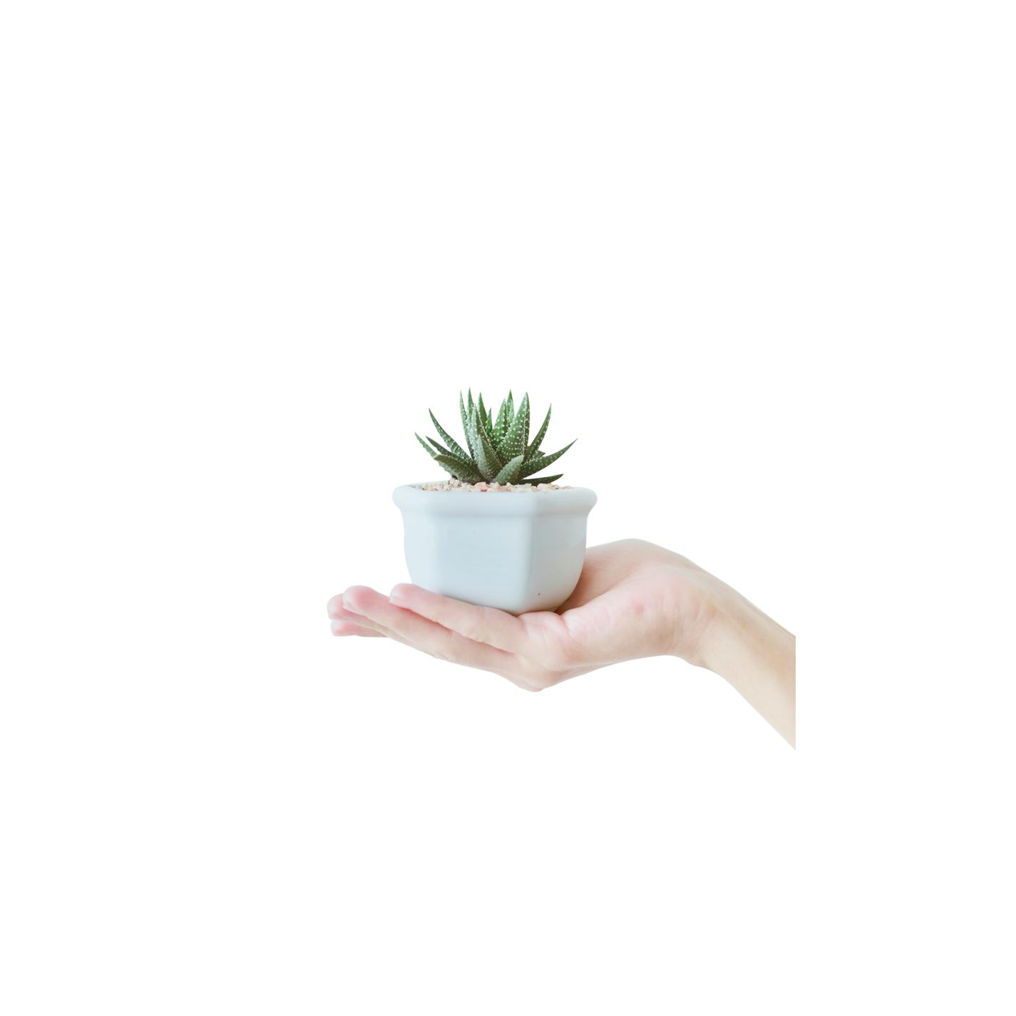 growth-image-1